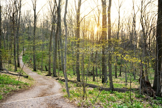 Photo: early spring trail in the Michigan northwoods