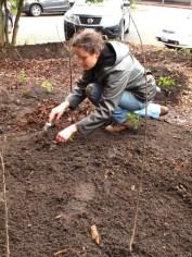 Planting the Plugs