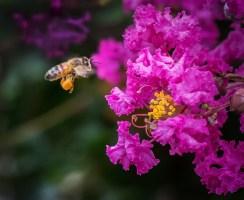 Fully Loaded Bee