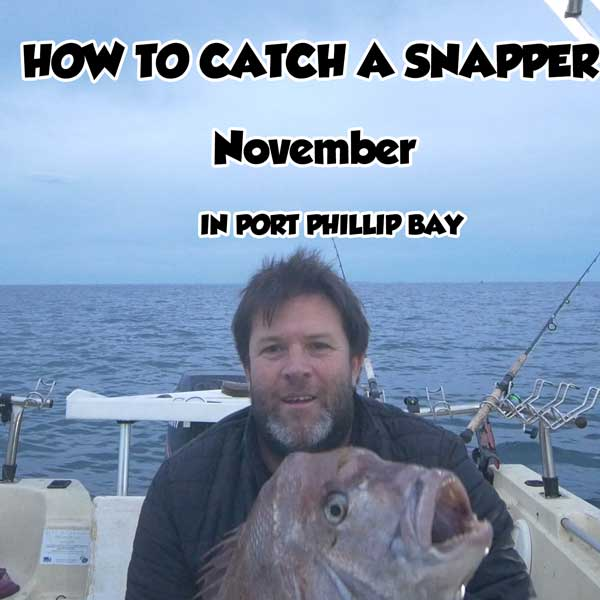 snapper fishing , how to catch melbourne