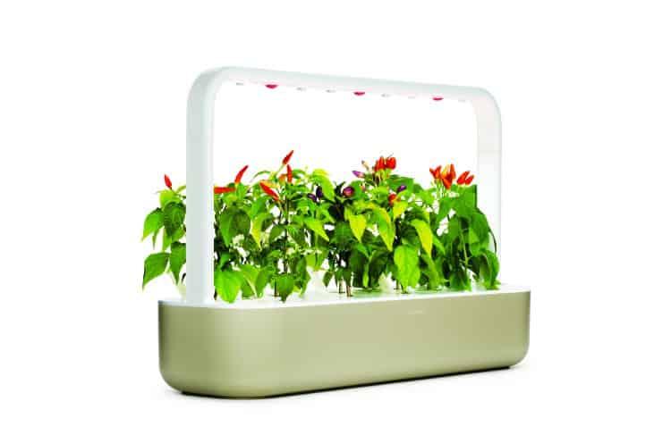 Mother's Day Gift Ideas: indoor gardening