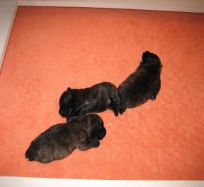 pups-2-june-17.jpg