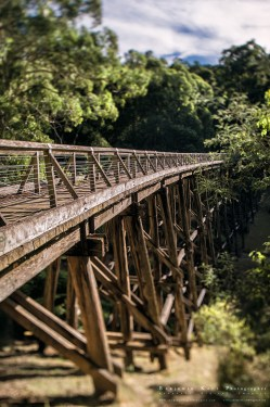 A quick visit and walk along an old railway line in Noojee.