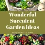 Wonderful Succulent Garden Ideas for You
