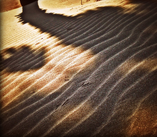 shadow. photo by desiree east