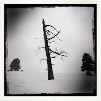 Winter Tree 3