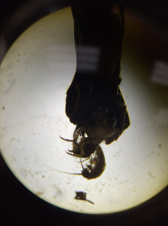 Photo of a micro-vertebrate by ART 342 student, Monica Bradburn