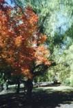 trees8.jpg