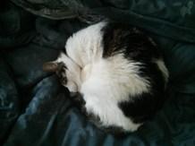 curled_snoop