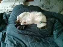 snoopy_curled