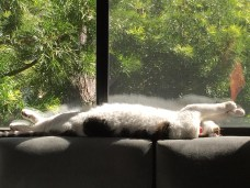 snoopy_stretched_on_windowsill