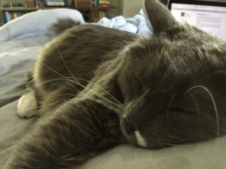 stitch_asleep