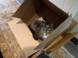 stitch_box
