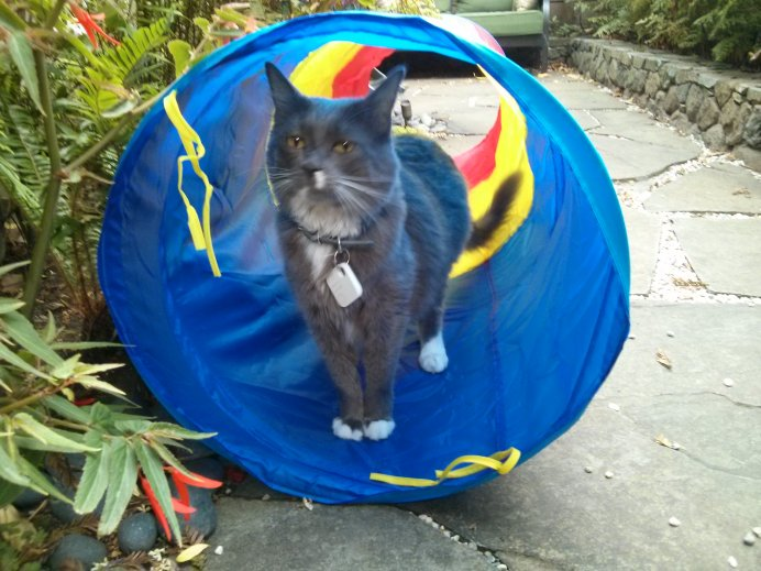 stitch_tunnel