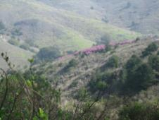hills_flowers.jpg