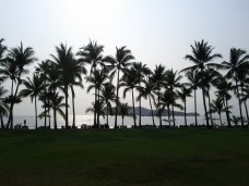 beach_daytime_palm_trees