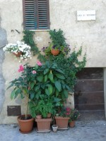 flowers_at_largo_di_fontebranda