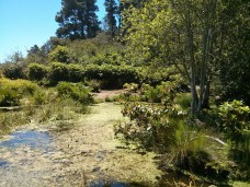 botanical_garden_big_pond
