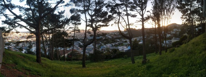 glen_park_trees_pano