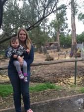 zoo_gina_brooke_zebras