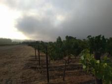 trail_vineyard