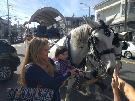 horse_and_carriage_in_noe