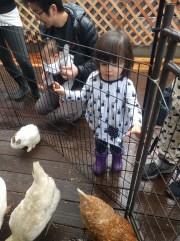 petting_zoo