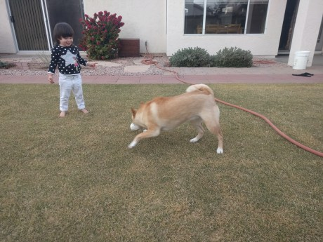 playing_with_dog