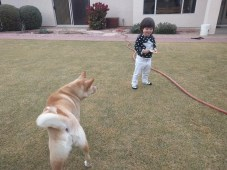playing_with_dog_2