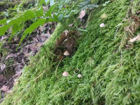 white_oak_hike_mushrooms