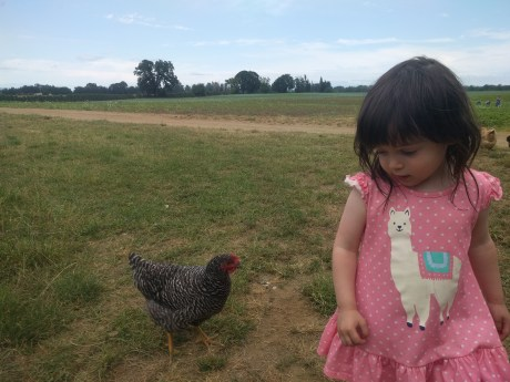 farm_chickens_3