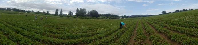 farm_pano