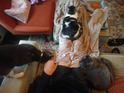 ryan_three_cats