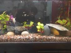santa_rosa_aquarium