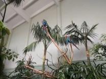 zoo_parrots