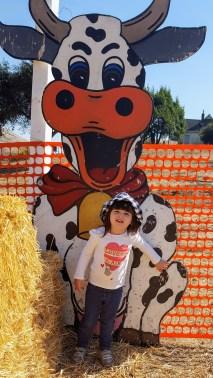 cutout_cow