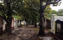lafayette_cemetery_trees