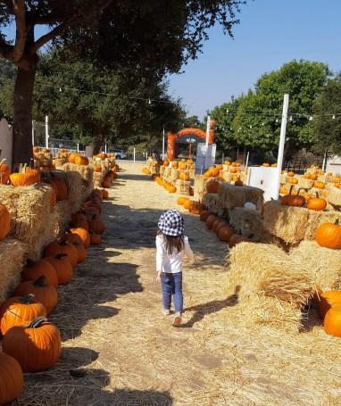 pumpkins_6