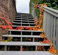 stairs_leaves