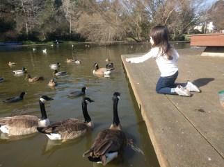 feeding_geese