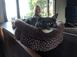 marley_cat_bed_funny_pose