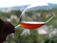 Glass with wine from the 25th day of tasting Qvevri Pinot Gris 2012 from Domaine Laurent Bannwarth