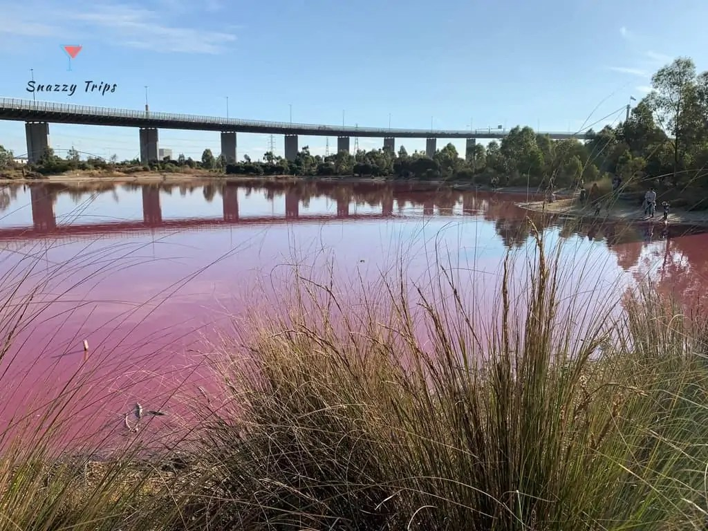 pink lake with grass and bridge