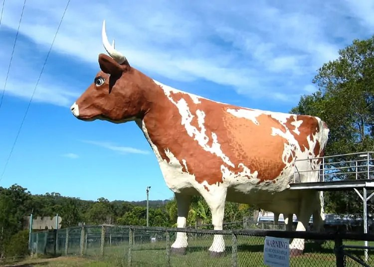 BigCow Nambour Snazzy Trips