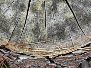 schoorl - wood 2