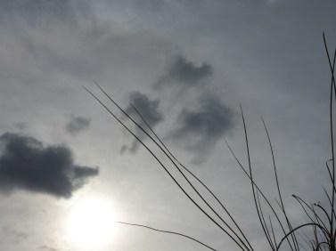 schoorl - sky grass