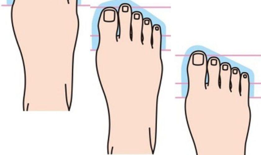 足の形 スニーカー 特徴 エジプト型 ギリシャ型 スクエア型 3 types of foot shapes sneakers womens