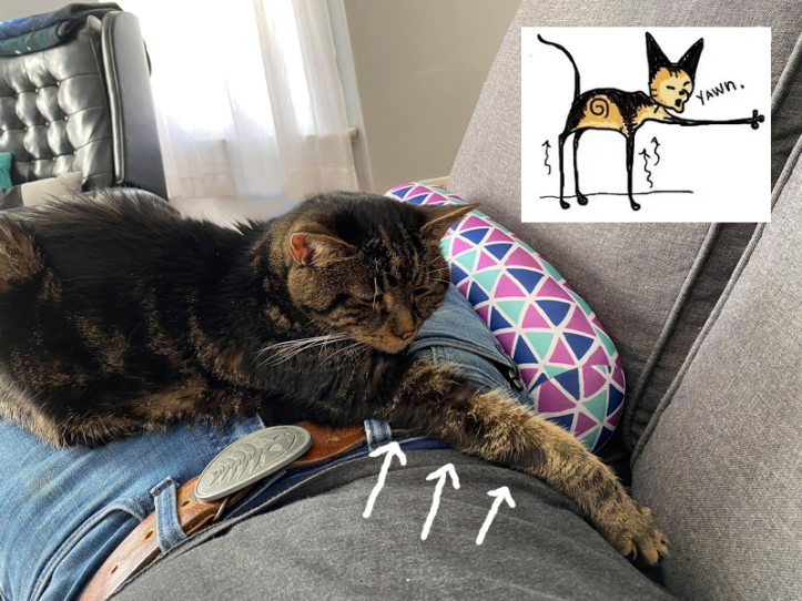 Dark tabby cat lies on Jamie's lap, her right arm stretched out to seemingly impossible lengths. There is an inset from a kitty comic I had made about this, where her legs are long and very thin. It was true!