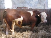 sneumgaard-alladin-382x300