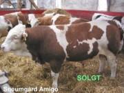 sneumgaard-amigo--400x300